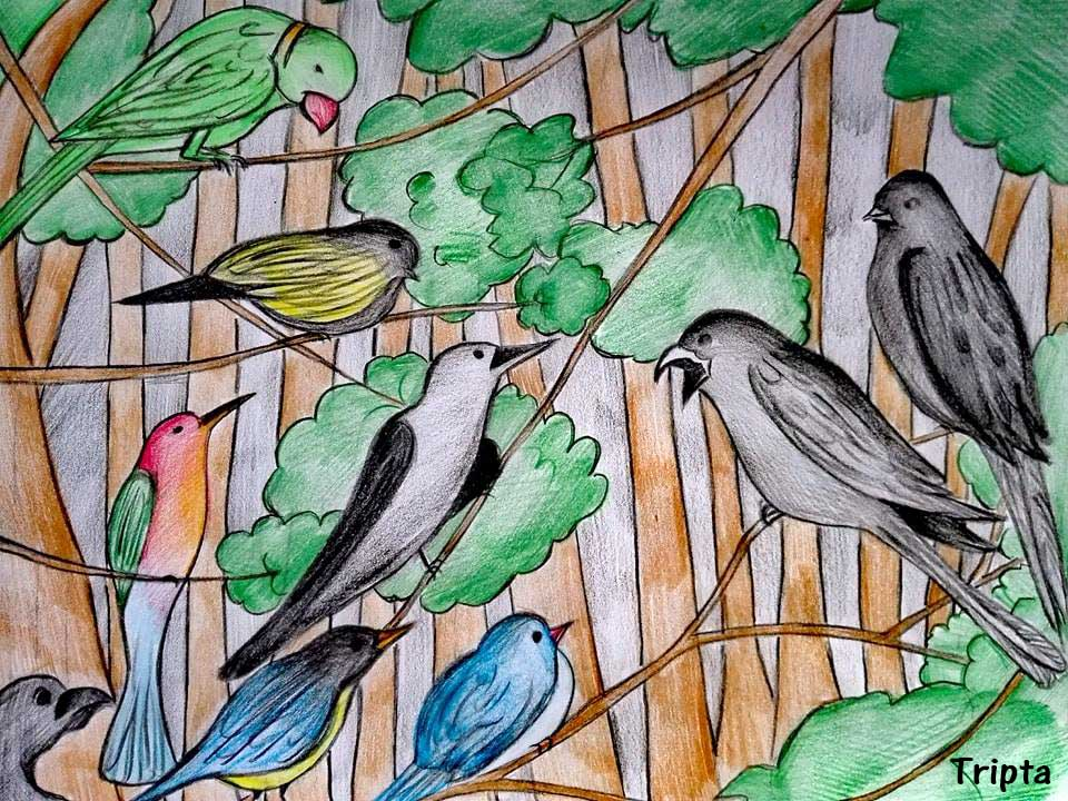 King and Queen Black drongo with other birds by Tripta Chakma